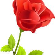 цветы любимым on My World.