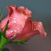 Татьяна Первухина on My World.