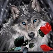 Волчица Серая on My World.