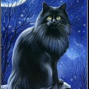 *** Лунный  кот *** on My World.